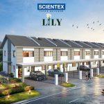 PT1A-Lily (1)